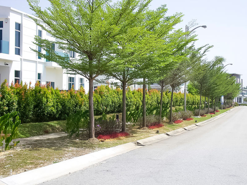 02-Landscaping-around-the-outer-perimeter-of-MyDiva-Homes